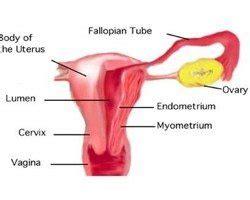 17 causas del retraso menstrual | Mundo Asistencial