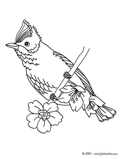 17 dessins de coloriage Oiseaux Exotiques à imprimer