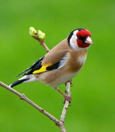 17 mejores ideas sobre Pájaros en Pinterest | Pájaros ...