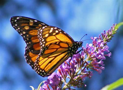 17th Annual Butterfly & Bird Festival   Fremont   Funcheap