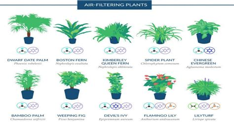 18 plants to purify the air in your house   Recommended by ...