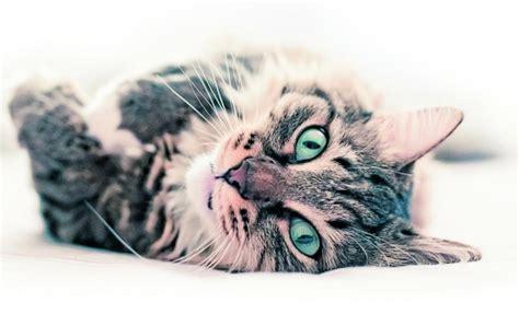 19 preguntas sobre los gatos