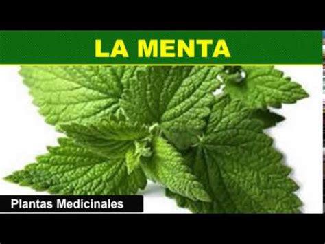 193 La Menta Plantas Medicinales - YouTube
