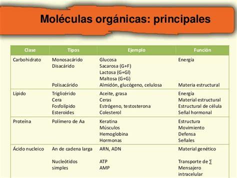 2. macromoleculas