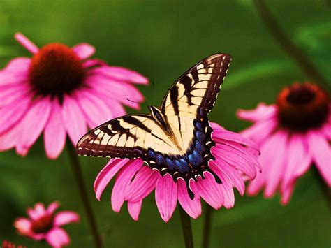 20+ Beautiful Pictures Of Butterflies