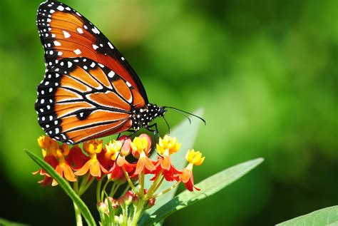 20+ Colourful Butterflies HD Wallpapers   WonderWordz