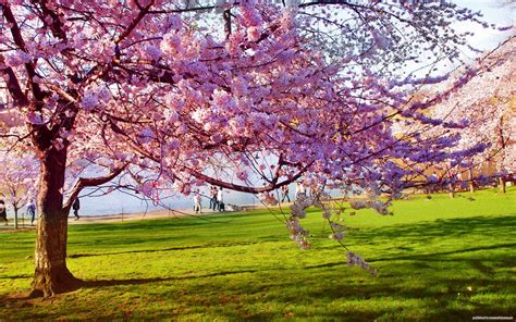 2014 Spring Equinox Is At 12:57 Eastern (U.S.), 16:57 GMT ...