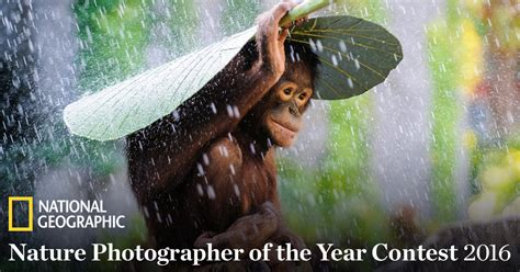2016 National Geographic Nature Photographer of the Year ...