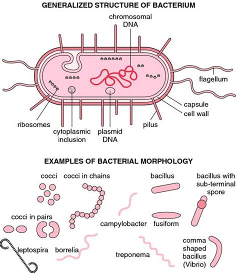 212 best Bacteria, Viruses & Fungi images on Pinterest