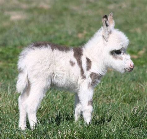 23 fotos de animales bebés que te harán morir de ternura ...