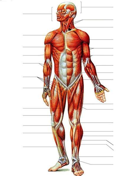25+ bästa Nombres del cuerpo humano idéerna på Pinterest ...