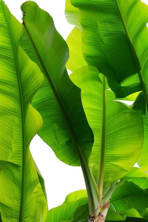 25+ best ideas about Leaves on Pinterest | Plant, Flora ...