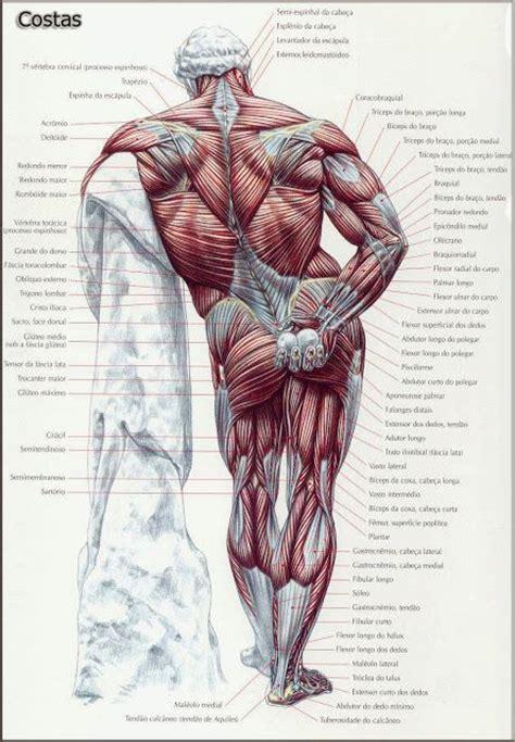 25+ melhores ideias de Anatomia muscular no Pinterest ...