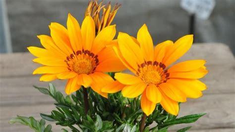 25+ melhores ideias de Plantas de sol pleno no Pinterest ...