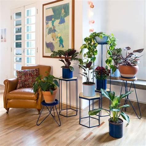 25+ melhores ideias sobre Plantas internas no Pinterest ...
