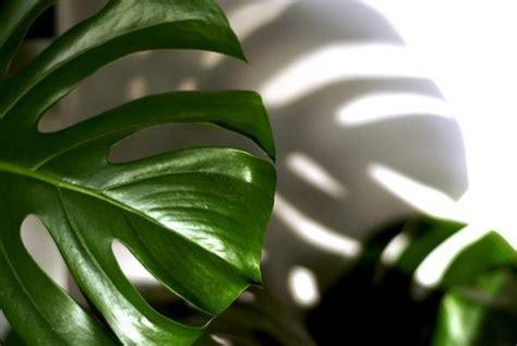 +25 Plantas de Interior que necesitan Poca Luz   ¡Resistentes!