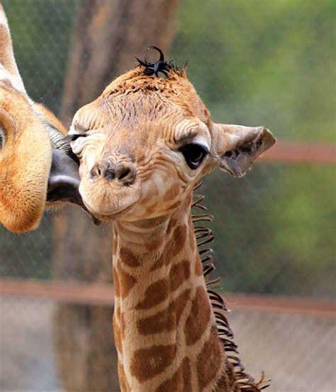 29 Fotos de animales bebés que te encantarán   NoticiasTVO.com