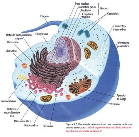 3.2 Los tipos de células: procariotas y eucariotas ...