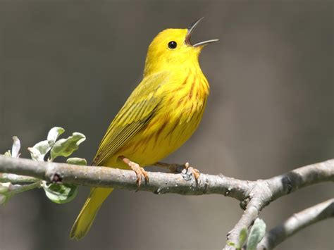 3 great holiday gift ideas that help protect wild birds ...
