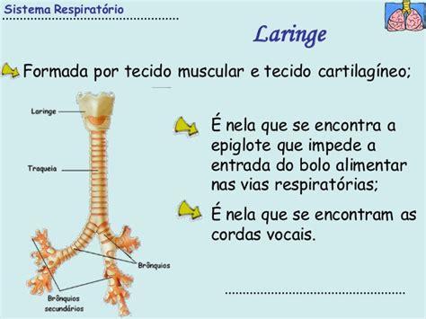 3 sistema respiratorio-pdf