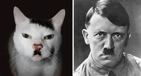 30 chats qui vont vous faire éclater de rire par leur ...