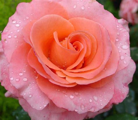 30 imágenes bonitas de Flores Hermosas para apreciar y ...