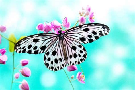 30 mariposas coloridas: Imágenes para compartir por ...
