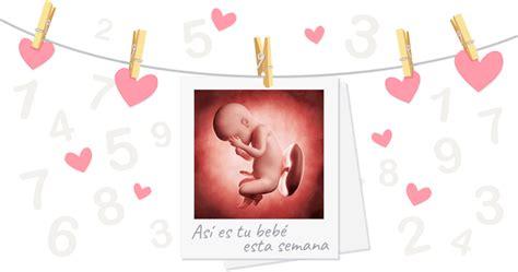 30 semanas de embarazo: cómo crece tu futuro bebé