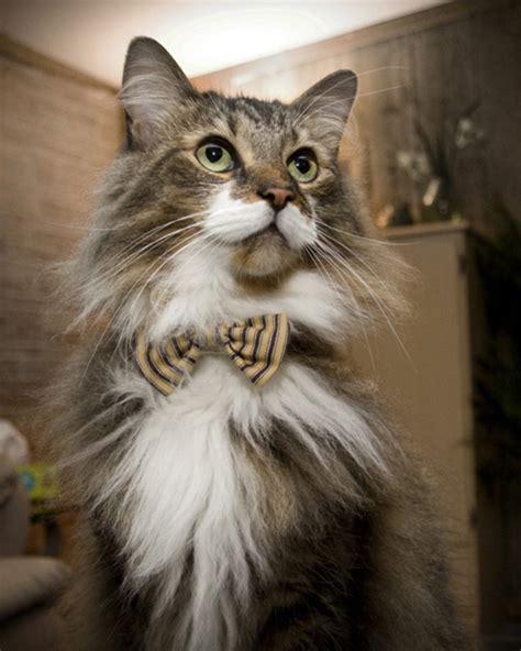 31 Gatos mais elegantes e estilosos do mundo - Blog Animal