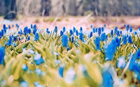 31+ HD Spring Wallpapers, Backgrounds, Images   Design ...