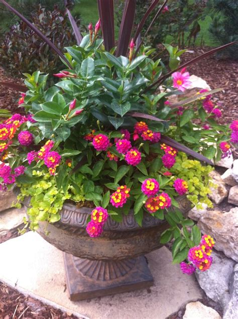 347 best images about Outdoor Flower container Ideas on ...