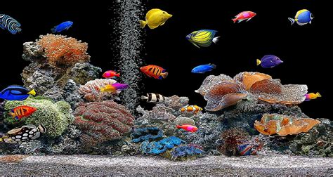 3D Aquarium Screensaver Wallpaper   Best Free HD Wallpaper