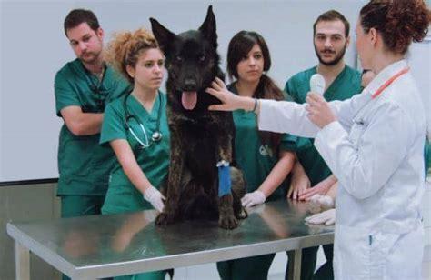 4 herramientas para un estudiante de veterinaria  eKuore