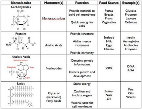 4 Major Biomolecules | Biology | Pinterest | Biology ...