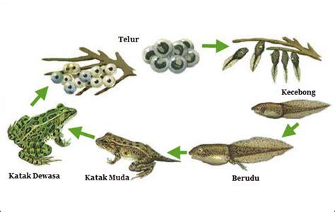 4 Perbedaan Metamorfosis Sempurna dan Tidak Sempurna
