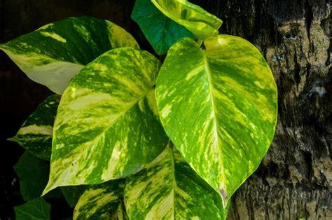 4 Plantas de Interior que Necesitan Poca Luz | Fundació ...