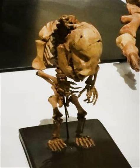 41 nuevos fósiles en el Museo Nacional de Ciencias ...