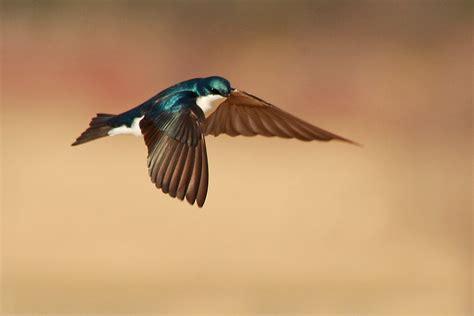 46 Flying Bird Hd Cool Wallpaper 548 :: Flying Birds Hd ...