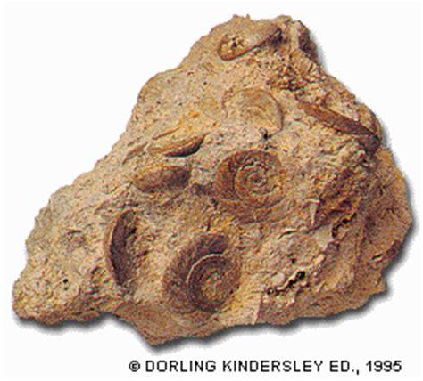 4BG BIOMED: Rocas sedimentarias