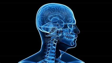 5 cosas que el sistema nervioso controla