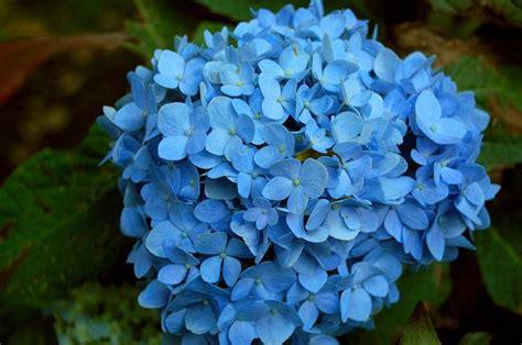 5 flores azules para el jardín   pisos Al día   pisos.com