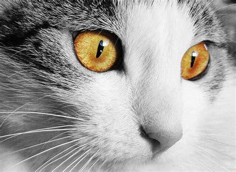 5 formas sorprendentes que los animales tienen de ...