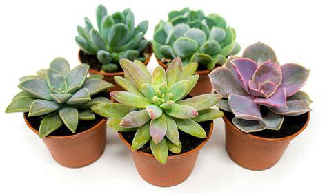 5 ideas para decorar tu casa con plantas de interior | La ...