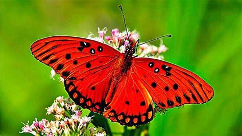 5 interesantes datos sobre las mariposas que van a fascinarte