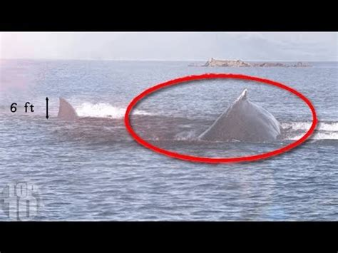 5 Megalodons Caught On Camera - Download HD Torrent