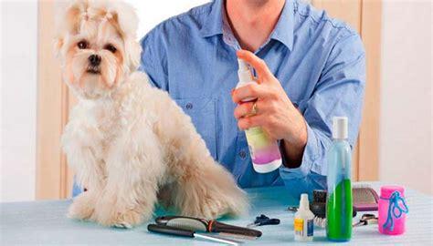 5 Mejores Colonias Para Perros del ⓴⓲ - Opiniones y Cual ...