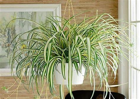 5 plantas de poca luz y fáciles de cuidar