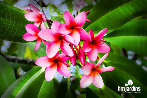 5 plantas fáceis e baratas para cultivar | HM Jardins
