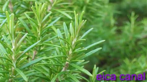 5 Plantas Medicinales que no Debes Olvidar Consumir - YouTube