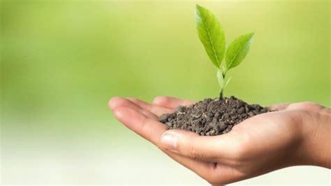 5 plantas que debes tener en casa para limpiar el aire ...